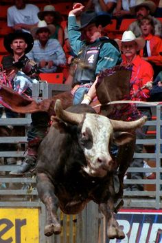 Jerome Davis Bull Rider | Jerome Davis would have made an ideal travelling partner forJosh ...