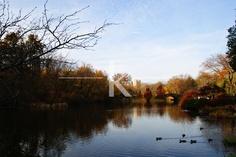 calm lake, central park, new york city