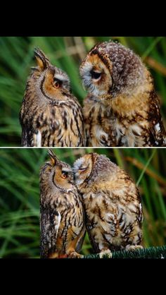 you think: aww owls kissing! he closed his eyes and everything! this really is a kiss