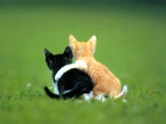 Cats Protection is the UK's leading cat charity. As a feline welfare charity, we help cats and kittens every year. Find out more about Cats Protection. Cute Kittens, Cats And Kittens, Kitty Cats, Baby Kitty, Neko Cat, Baby Animals, Funny Animals, Cute Animals, Animals Kissing