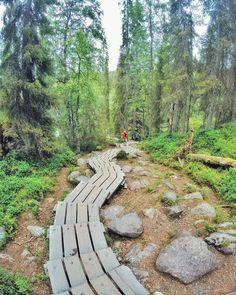 Endless stairs  . . . . . . #jyrävä #tbt #travel #traveler #traveling #travelgram #finnishboy #landscape #landscape_lovers #finnish #travelphotography #instatravel #instapic #instagramers #f4f #hiking #follow #followme #nature #instarunners #trailrunning #nature_perfection #fashion #friends #smile #instamood #nofilter #sun #love #finnishgirl
