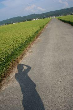 The mid area in Niigata prefecture.