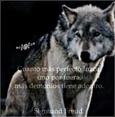 Husky, Wolf, Animals, One Man Wolf Pack, Armour, Anime Male, Wolves Fighting, Inspirational Quotes, Thoughts