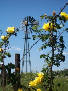 Windmill, Barbed Wire Fence & Yellow Rose's I really want a windmill and wild yellow rose bush. Not so much on the barbed wire Country Farm, Country Life, Country Living, Country Roads, Farm Windmill, Old Windmills, Old Farm Equipment, Wind Of Change, Country Scenes