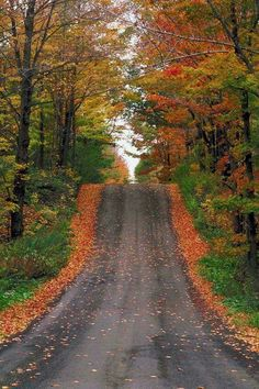 I love a country road when all the leaves have changed colors.