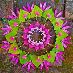 Mandalas hechos de flores: Kathy Klein ~ LoQuieroLoCompro.com