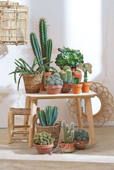 Collection de cactus et succulentes en harmonie avec l'osier.