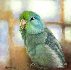 Pacific Parrotlet Painting - Ollie by Catherine Garneau