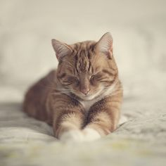 Feline Flu is One of the Most Serious Cat Health Issues Cute Cats And Kittens, Cool Cats, Kittens Cutest, Ragdoll Kittens, Tabby Cats, Funny Kittens, Bengal Cats, White Kittens, Black Cats