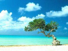Aruba è un'isola situata nel Mare Caraibico, a nord del Venezuela. Al contrario di molte altre isole dei Caraibi, Aruba è un'isola di scarsi rilievi, scarsa vegetazione e con un clima secco; tali caratteristiche hanno favorito lo sviluppo del turismo.