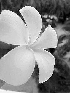 White flower..