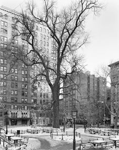 Mitch Epstein/Sikkema Jenkins & Company, New York  English Elm, Washington Square Park, Manhattan, 2012. New York Times Magazine 02/12/12.