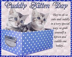 Sweet card to celebrate Cuddly Kitten Day. Free online Cuddly Kittens In A Box ecards on Cuddly Kitten Day Funny Cat Videos, Funny Cats, Romantic Messages, Miss You Cards, Warm Hug, Name Cards, Cat Gif, Kittens Cutest, Cuddling