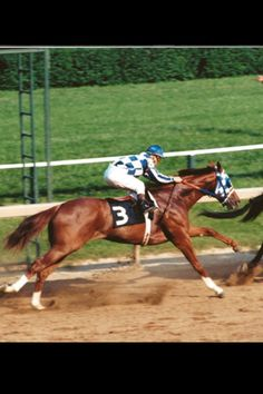 """""""Secretariat"""" ~ The 9th horse to win The Triple Crown ~ He won the big three in 1973 ~"""