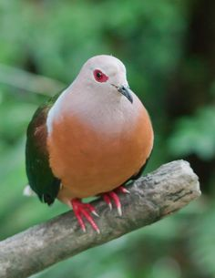 Kinds Of Birds, All Birds, Cute Birds, Little Birds, Exotic Birds, Colorful Birds, Exotic Animals, Bird Pictures, Nature Pictures