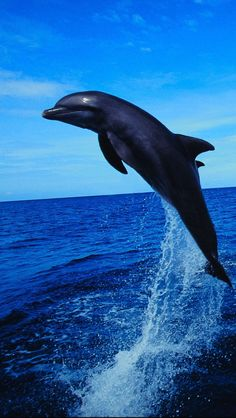 Dolphin-Leaping-1136x640.jpg (640×1136)
