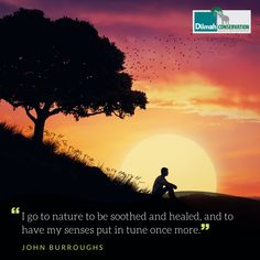 The human body is capable of self-healing and self-renewing. When the right conditions are created, vibrant well-being is its natural state. Spending time in the natural environment enables our mind and body to heal, regenerate and even rejuvenate itself. Nature and living naturally is the greatest detox we can afford. #MotivationMonday #Conservation #Dilmah #NoCompromise #DilmahConservation #DiversityofLife #LoversofLife #motivationalquotes #quotes #inspirationalquotes Shared Reading, Make Business, Educational Programs, Human Services, Social Justice, Human Body, Conservation, Motivationalquotes, Detox