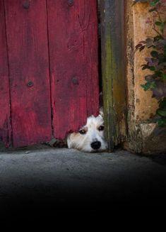 dog peeping