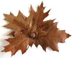 susangaylord.com: Oak Leaf Book