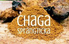 Chaga brukar jag dricka som varmt te eller använda avkylt som bas i smoothies. Min man brukar också använda det som bas för sitt ekologiska snabbkaffe. Flera har frågat mig om vad Chaga riktigt är …