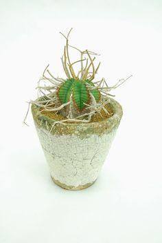 スーパーバリダ Euphorbia meloformis 'Super Valida'