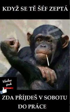 Jokes Quotes, Memes, Funny Animals, Cute Animals, In The Zoo, Pretty Animals, Chimpanzee, Favorite Words, Adult Humor