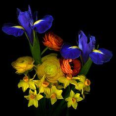 Flowers... Photographer Magda indigo