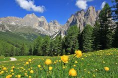 Bellissimo! Love Dolomites in the summer!!     Beautiful #valdifassa in the heart of #dolomites - June 2012