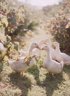 "* * GEESE: "" Likes a bird on a wire, likes a drunk in a midnight choir, weez haz tried in our own ways to be free.""    [Leonard Cohen"