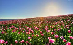 Refranes y plantas que florecen en el mes de Marzo - https://www.jardineriaon.com/refranes-marzo.html #plantas
