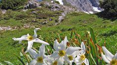Visit Romania, Countryside, Bird, Flowers, Pictures, Animals, Inspiration, Image, Romania