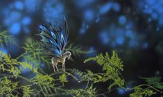 Fairy Foal Sapphire amidst dew drops on the asparagus fern.
