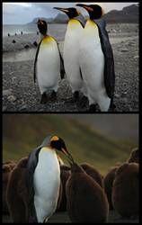 """Gerçek penguenlerle çekilen ilk 3 boyutlu film """"Penguen Kral"""" 8 Şubat'ta gösterime giriyor"""
