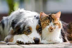 Cat & Dog by Sandra Schürmans, via 500px