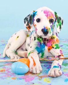 Puppy + paint