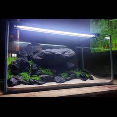 Turtle Aquarium, Nano Aquarium, Aquarium Ideas, Planted Aquarium, Freshwater Turtles, Freshwater Aquarium, Led Aquarium Lighting, Cool Tanks, Fish Tanks