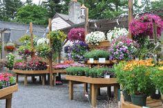 My favorite garden center: Meadowbrook Farms (by Daisy Crane)