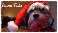Lilly vi augura Buon Natale ❤