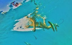 Surfing With Angel Fish