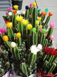 cactus - Buscar con Google
