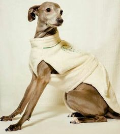 Soft and comfy dog robe!! Perfect for after bath to help dry the coat and keep your fur baby warm!!  www.teacuptutucharm.com