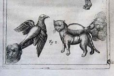 16th century military manual... that cat has a jet pack..