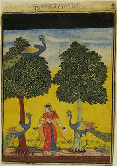 Kakubha Ragini alone attracts 3 Peacocks. Ragamala  ca. 1620    Bikaner, India