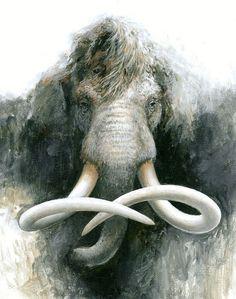 mammoth these lined 20000 years ago Prehistoric Wildlife, Prehistoric Creatures, Elephant Art, Elephant Paintings, Extinct Animals, Dinosaur Fossils, Jurassic Park, Archaeology, Pet Birds