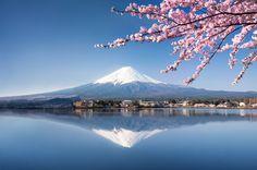 Vulkan mit schneebedecktem Gipfel, der sich im Wasser eines Sees spiegelt. Zweige japanischer Kirschblüte im Vordergrund.