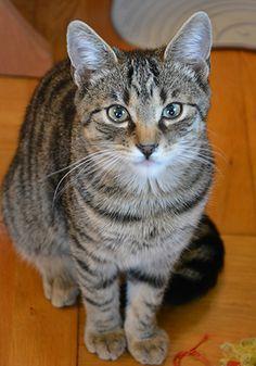 Borowik kontakt w sprawie adopcji: 512 182 032 fundacja@felineus.org
