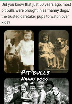 Pitbull Facts, Nanny Dog, 50 Years Ago, Pit Bulls, Did You Know, Knowing You, Pup, Dogs, Movie Posters