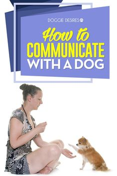 How to communicate with a dog >> :