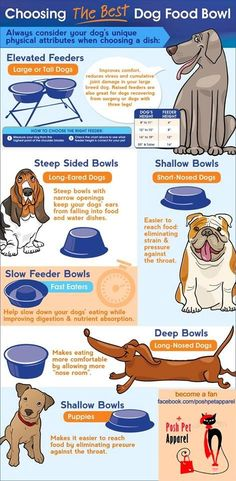 How to choose a water bowl.  #dog #resources #infographic