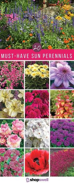 easy-to-grow collection of the best sun perennials - perfect for any garden! easy-to-grow collection of the best sun perennials - perfect for any garden!easy-to-grow collection of the best sun perennials - perfect for any garden! Garden Shrubs, Lawn And Garden, Garden Plants, Perenial Garden, Full Sun Garden, Big Garden, Family Garden, Garden Pond, Water Garden